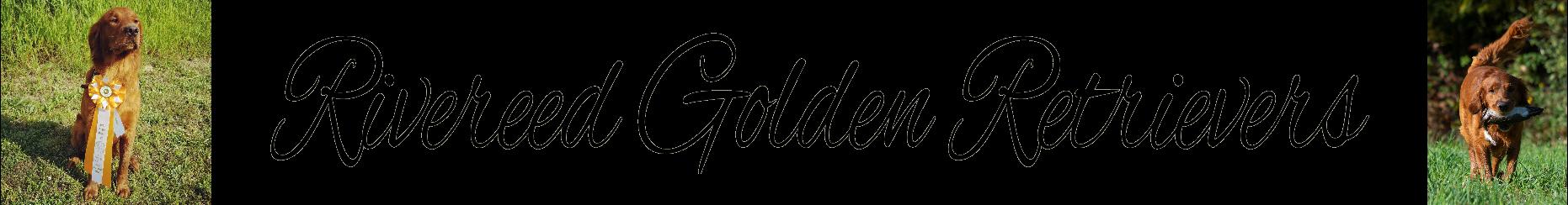 Rivereed Goldens